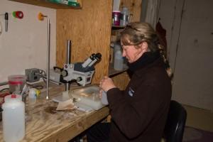 Foraminifera lab, Antarctica