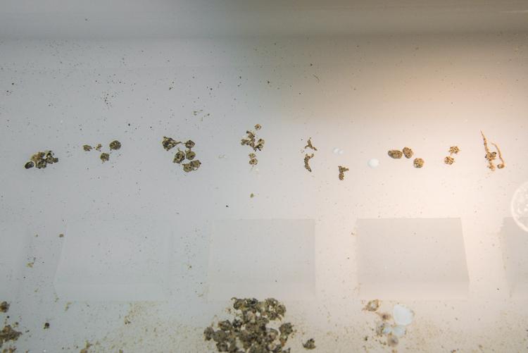 Antarctic Foraminifera