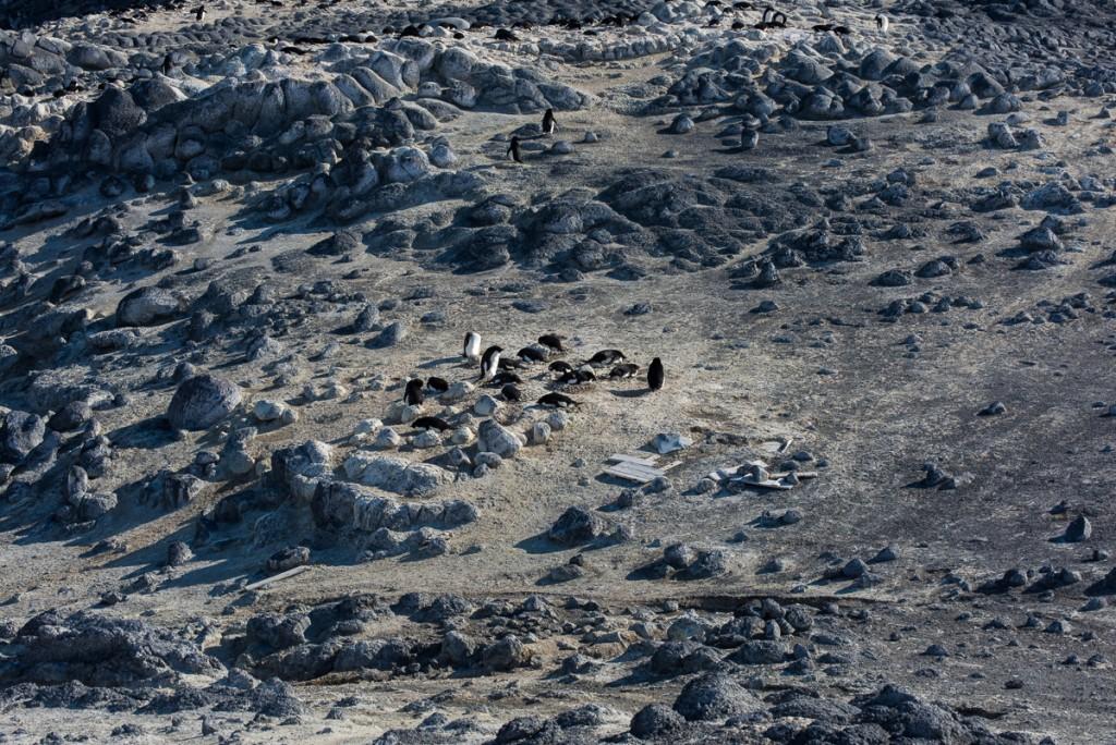 Penguin colony, Cape Royds