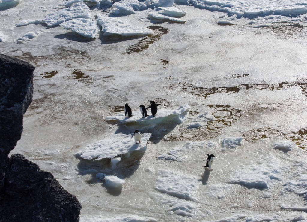 Penguins on ice at Cape Royds