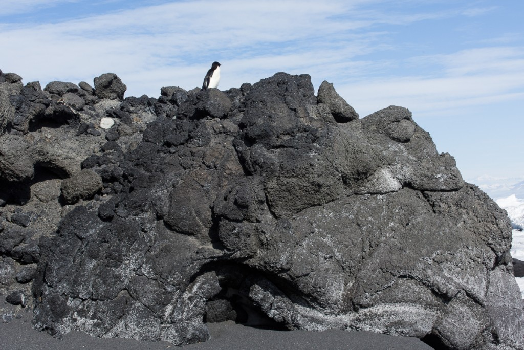 Penguin on volcanic rock, Cape Royds